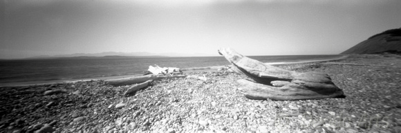 Ebey's Landing Driftwood 02