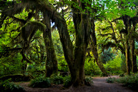 Hall of Mosses 2